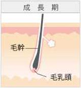 広島のレーザー脱毛イメージ1